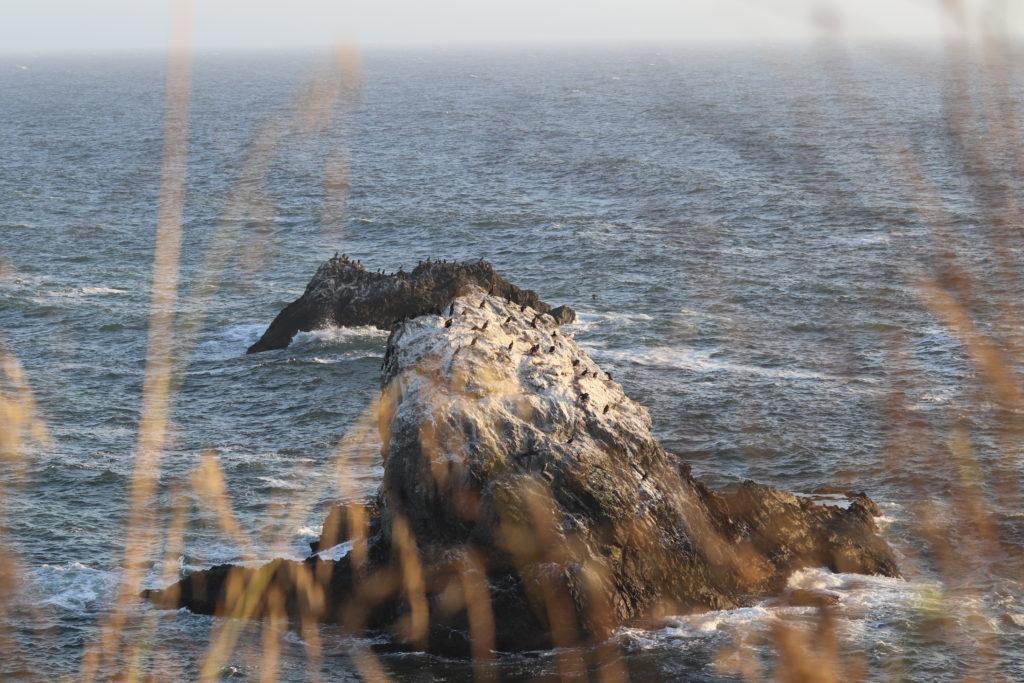 Beautiful scenery at Goat Rock Beach