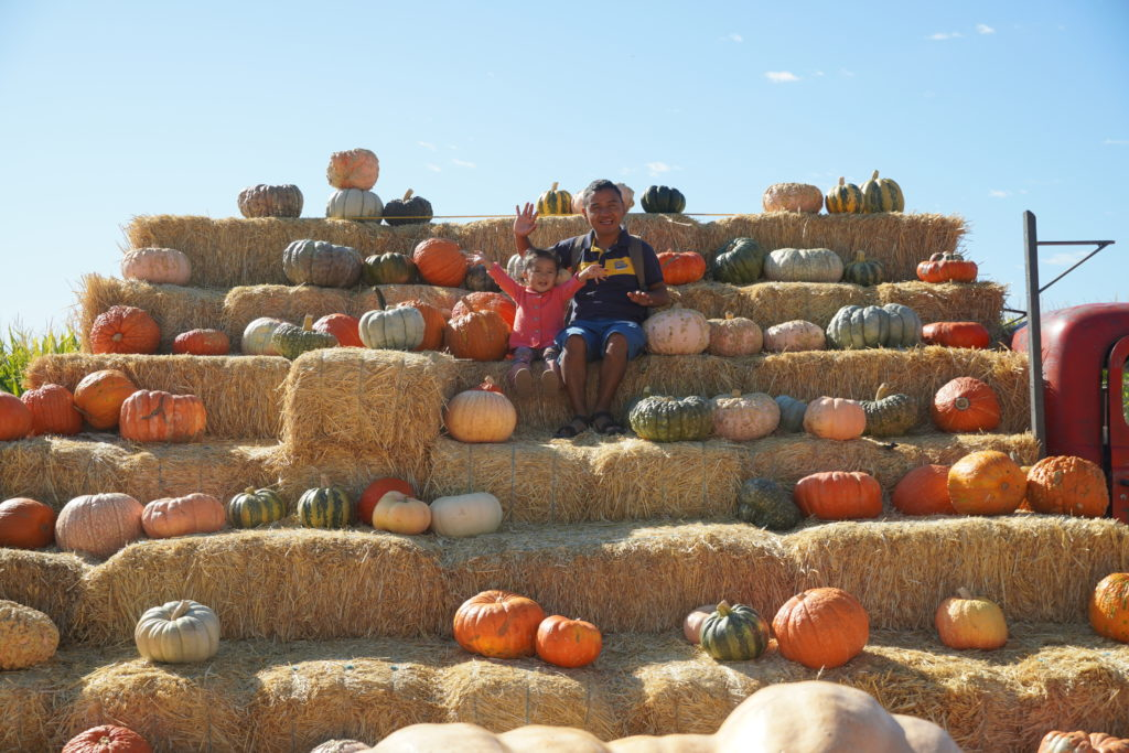 pumpkin patch at Laryy's produce